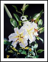 EXOTIC LILIES, Paintings, Realism, Floral, Oil, By Donna Francis