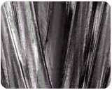 Fan Palm, Decorative Arts, Paper Art, Photography, Poster, Printmaking, Abstract, Expressionism, Fine Art, Performance Art, Botanical, Composition, Conceptual, Decorative, Environmental art, Figurative, Inspirational, Nature, Performance Art, Tropical, Photography: Metal Print, Photography: Photographic Print, Photography: Premium Print, Photography: Stretched Canvas Print, By Ira Silence