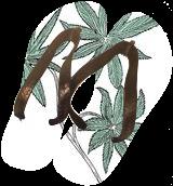 Feather Flower 2, Decorative Arts,Digital Art / Computer Art,Drawings / Sketch,Illustration, Fine Art, Botanical,Decorative,Environmental art,Floral,Nature, Digital,Ink,Pencil, By William (Bill) Gregory Ivinson