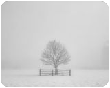 Fenced In, Photography, Fine Art,Photorealism, Landscape,Nature, Photography: Premium Print, By Mike DeCesare