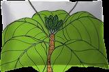Fish-Plate Shrub - Guettarda speciosa, Digital Art / Computer Art,Drawings / Sketch,Illustration, Fine Art, Botanical,Environmental art,Floral,Nature, Digital,Ink,Mixed,Pencil, By William (Bill) Gregory Ivinson
