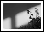 flower, Photography, Realism, Still Life, Photography: Photographic Print, By yevgeniya petrenko