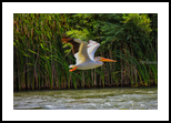 Flying Low Over The River, Photography, Fine Art, Animals, Photography: Stretched Canvas Print, By Jim Stewart
