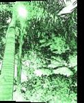 Foliage, Digital Art / Computer Art, Abstract,Expressionism,Impressionism, Nature, Digital, By Michael J Duke