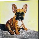 French Bulldog Puppy #2, Paintings, Realism, Animals, Acrylic, By Lucyanne Driusi Terni