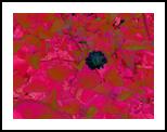 Garden, Digital Art / Computer Art,Photography, Pop Art, Composition, Digital, By Julie Hermoso