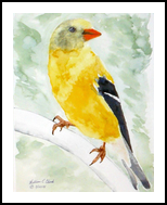 Goldfinch, Paintings, Realism, Animals, Painting, By William Clark