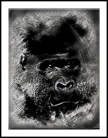 Gorilla grape, Drawings / Sketch,Graphic, Realism, Animals, Charcoal,Digital,Painting, By Shazzy and Johns  Art Emporium
