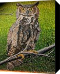 Great Owl, Paintings, Impressionism, Animals, Acrylic,Canvas, By Celia J Nelson