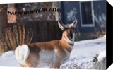 Happy New Year 2018, Photography, Fine Art, Animals, Photography: Stretched Canvas Print, By Jim Stewart