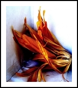 Harvest, Photography, Photorealism, Still Life, Photography: Metal Print, By fred wilson