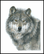 Haunting Eyes, Drawings / Sketch,Paintings, Photorealism,Realism, Nature,Wildlife, Painting,Pencil, By Carla Kurt
