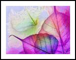 HC0268, Digital Art / Computer Art, Fine Art, Decorative,Floral, Digital, By Heloisa do Nascimento Castro