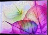 HC0268, Digital Art / Computer Art, Abstract,Fine Art, Botanical,Decorative,Figurative,Nature, Digital, By Heloisa do Nascimento Castro