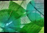 HC0272, Digital Art / Computer Art, Fine Art, Decorative,Floral,Nature, Digital, By Heloisa do Nascimento Castro