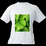 HC0281, Digital Art / Computer Art, Expressionism,Fine Art, Botanical,Decorative,Nature, Digital, By Heloisa do Nascimento Castro