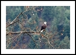 High Perch, Photography, Photorealism, Animals,Landscape, Photography: Premium Print, By Mike DeCesare