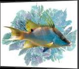 Hogfish in the seafans, Digital Art / Computer Art, Impressionism, Animals, Photography: Premium Print, By Glenn Lathi