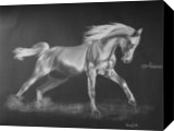 Horse 2, Drawings / Sketch, Fine Art, Animals, Pastel,Pencil, By Hennie Cloete