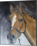 Horses Beauty, Paintings, Fine Art,Realism, Animals,Portrait, Painting,Watercolor, By Kelly A Mills