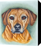 Hound Portrait, Drawings / Sketch, Realism, Figurative, Oil, By Stefan Pabst
