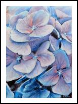 Hydrangea, Paintings, Fine Art, Botanical,Floral,Nature, Acrylic,Canvas, By Marta Kuźniar