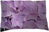 Hydrangia, Digital Art / Computer Art, Realism, Floral, Digital, By William Clark