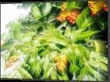 Inedible fruits, Digital Art / Computer Art, Realism, Nature, Digital, By BENARY  IMAGE