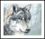 Intent Eyes, Decorative Arts,Drawings / Sketch,Paintings, Photorealism,Realism, Animals,Nature,Wildlife, Painting,Pencil, By Carla Kurt