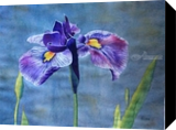 Iris, Paintings, Impressionism, Floral, Watercolor, By Christina Giza