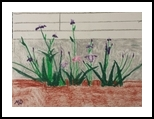 Irises, Paintings, Impressionism, Botanical, Pastel, By MD Meiser