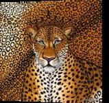 Jaguar, Paintings, Expressionism,Modernism, Animals, Canvas, By Helen - Bellart