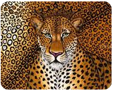 Jaguar, Paintings, Expressionism,Modernism, Animals, Canvas, By Helen - Bellart