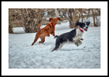 Jump And Run, Photography, Fine Art, Animals, Photography: Stretched Canvas Print, By Jim Stewart