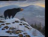 Last Look Black Bear, Paintings, Realism, Animals, Oil,Painting, By Frank S. Wilson