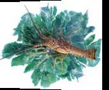 Lobster with Seafans, Digital Art / Computer Art, Impressionism, Animals, Photography: Premium Print, By Glenn Lathi