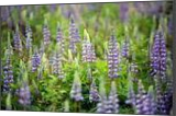 Lupine, Photography, Fine Art,Photorealism, Botanical,Floral, Photography: Premium Print, By Mike DeCesare