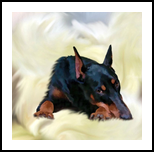 Lying Doberman, Digital Art / Computer Art, Fine Art, Animals, Canvas,Digital, By Irina Potemkina