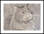 Maine Coon Cat, Graffiti, Realism, Animals,Portrait, Pencil, By Cybele Barbosa