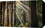 Morning Light, Photography, Fine Art,Photorealism, Landscape,Nature, Photography: Premium Print, By Mike DeCesare
