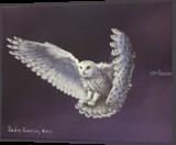 Night Owl, Paintings, Fine Art, Wildlife, Acrylic, By Sean Conlon