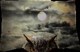 Night Watch, Digital Art / Computer Art, Realism, Animals, Digital, By William Clark