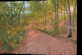 Oak Forest, Paintings, Fine Art,Photorealism,Realism, Landscape,Nature, Canvas,Oil, By Dejan Trajkovic
