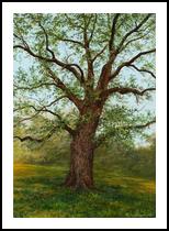 Old oak, Paintings, Realism,Romanticism, Botanical,Landscape, Canvas,Oil, By Nataliya KyrkachAntonenko