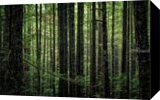 Olympic Forest, Photography, Fine Art,Photorealism, Landscape,Nature, Photography: Premium Print, By Mike DeCesare