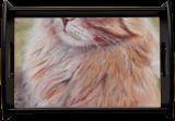 Orange Cat, Drawings / Sketch,Paintings,Pastel, Fine Art,Realism, Animals,Portrait, Acrylic,Oil,Pastel, By Cybele Barbosa