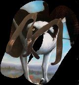 Osprey, Paintings, Fine Art, Wildlife, Acrylic, By Jon Quinn