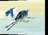 Over the Pond, Digital Art / Computer Art, Realism, Animals, Digital, By William Clark