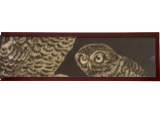 Owls 1, Paintings, Minimalism,Realism, Nature,The Primative,Wildlife, Oil, By Rick Seguso