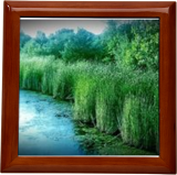 Panoramic Cattails at Dusk, Photography, Fine Art, Nature, Digital, By Cheryl Schlief